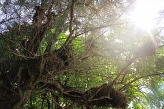 Drzewo w świetle słonecznym brać w Kolombo Zdjęcie Stock