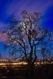 Drzewo w backlight Zdjęcie Royalty Free