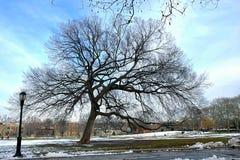 Drzewo w Brooklyn Fotografia Royalty Free