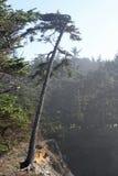 Drzewo w brzeg akrach parki, Oregon wybrzeże Zdjęcia Royalty Free