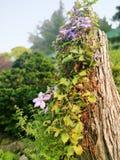 Drzewo w Buchart ogródzie w Vancouver〠' zdjęcie royalty free