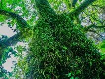 Drzewo w dżungli Obrazy Stock