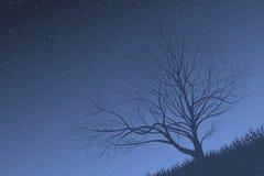 Drzewo w deszczu Fotografia Stock
