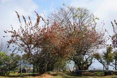 Drzewo w Doi Ang Khang zdjęcia royalty free