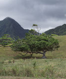 Drzewo w dolinie Fotografia Royalty Free
