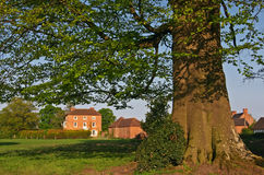 drzewo w domu obrazy royalty free