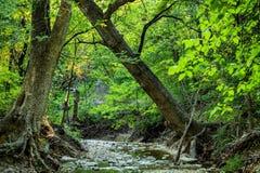 Drzewo w drewnach zdjęcie royalty free