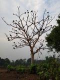 Drzewo w drewnach obraz stock