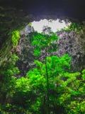 Drzewo w dziurze Zdjęcie Stock
