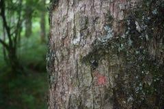 Drzewo w forrest Fotografia Royalty Free