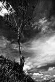 Drzewo w górę wysokości Obrazy Stock