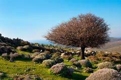 Drzewo w górach Zdjęcia Royalty Free