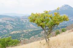 Drzewo w górach Obraz Royalty Free