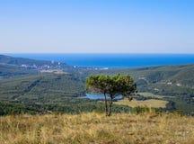 Drzewo w górach Obrazy Stock