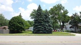 Drzewo w góry perspektywie Fotografia Stock