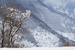 Drzewo w Grands Goulets wąwozie, Francuscy Alps zdjęcie royalty free