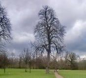 Drzewo w Hyde parku obraz stock