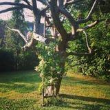 Drzewo w jardów kwiatach Zdjęcie Stock