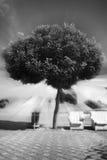Drzewo w jaskrawych promieniach światło zdjęcie royalty free