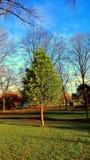 Drzewo w jesień Zdjęcie Royalty Free