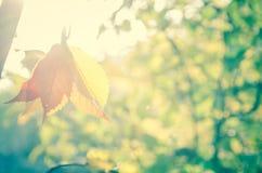 Drzewo w jesieni świetle słonecznym obraz stock