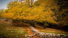 Drzewo w jesieni zdjęcie royalty free