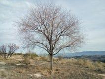 Drzewo w jesieni Obrazy Royalty Free