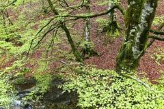 Drzewo w jesieni blisko rzeki Zdjęcie Stock