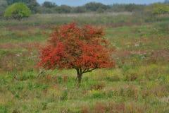 Drzewo w jesieni collors Fotografia Royalty Free