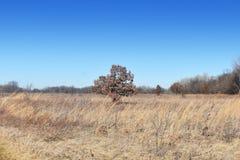Drzewo w jesieni na prerii Zdjęcie Stock