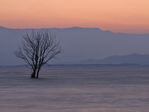 Drzewo w jeziorze przy świtem Fotografia Royalty Free