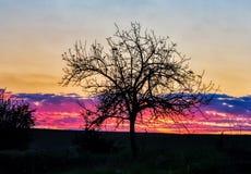 Drzewo w koloru niebo fotografia royalty free