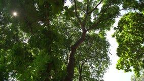 Drzewo w lasowej naturze zbiory wideo
