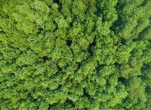 Drzewo w lasowym odgórnym widoku Obrazy Royalty Free