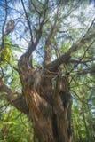 Drzewo w lesie zdjęcie royalty free