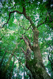 Drzewo w lesie Obraz Stock