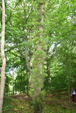 Drzewo w lesie Zdjęcia Royalty Free