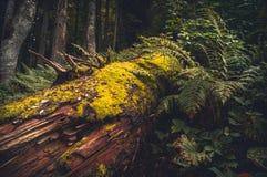Drzewo w mech lesie fotografia royalty free