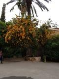 Drzewo w Medersa Ben Youssef Marrakesh obrazy stock