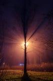 Drzewo w mgłowym parku Zdjęcia Stock