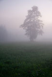 Drzewo w mgle Obrazy Royalty Free