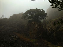 Drzewo w mgle Obraz Stock