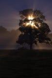 Drzewo w mglistej nocy zdjęcie stock