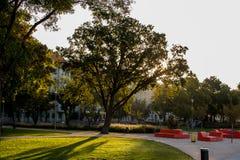 Drzewo w miasteczku Zdjęcie Royalty Free