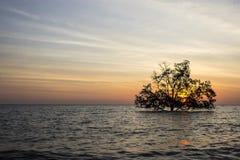 Drzewo w morzu Obraz Stock