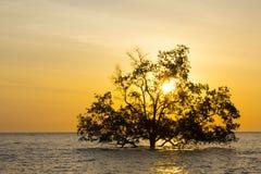 Drzewo w morzu Fotografia Royalty Free