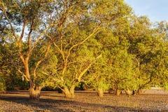 Drzewo w morzu z kolorem światło słoneczne Obrazy Royalty Free