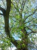 Drzewo w niebie Zdjęcia Royalty Free