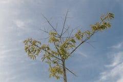 Drzewo w niebieskim niebie Zdjęcia Royalty Free