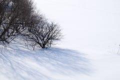 Drzewo w śniegu Fotografia Stock